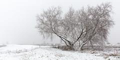 Winter has started in Kinderdijk (Wim Boon Fotografie) Tags: wimboon winter sneeuw snow sneeuwinkinderdijk canoneos5dmarkiii canonef2470mmf28liiusm alblasserdam