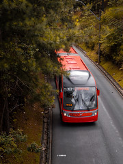 Through the Woods (GMPdS) Tags: gabriel moreno gabrielmpds sony dscw610 w610 curitiba parana brasil brazil bus onibus brt red vermelho bi articulado biarticulado articulated biarticulated tree arvores yellow amarelo street rua asphalt asfalto