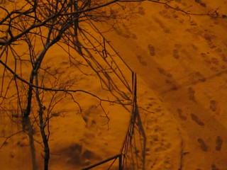 yard in winter at night