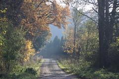 Kikoły, Warmia, Poland (LeszekZadlo) Tags: road countryside trees green autumn fall warmia ermland path yellow leaves polska poland polonia pologne polen paisaje pejzaż landscape landschaft europe eu ue nature natureza naturaleza