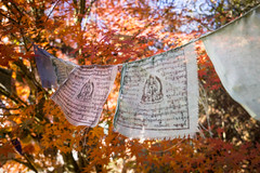 faded prayer flags (taxtamas) Tags: autumn orange color colors prayer flag buddhist outdoor faded buddhism leaves