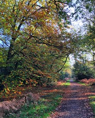 Autumn In The Forest (Marc Sayce) Tags: trees colours fall leaves autumn november 2017 alice holt forest hampshire farnham surrey south downs national park