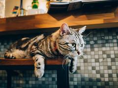 CAT 。 猫ちゃん (無聊鬼) Tags: cat 貓 喵 猫 leicadg15mmf17 panasonic gm1