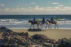 Brisk (Bud in Wells, Maine) Tags: wellsbeach autumn sunny horses riding beach wells maine recreation