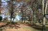 Low Sun,Westburn Park,Aberdeen_nov 17_241 (Alan Longmuir.) Tags: westburnroad westburnpark grampian aberdeen lowsun