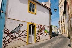 street art in Caldas da Rainha, Portugal (Gail at Large | Image Legacy) Tags: 2017 caldasdarainha portugal birds gailatlargecom streetart