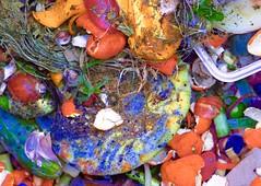 Compost (elbrozzie) Tags: compost