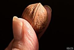 Una piccola noce (A.Baldi) Tags: macromondays fingertips noce