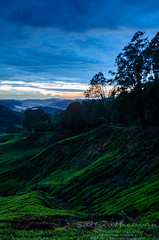 morning at cameron (Dingo photography) Tags: morning sunrise hill hillside landscape nikon d5100 dx colours malaysia malaysianphotographers cameronhighlands pahang