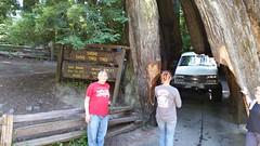 Shrine.Drive.Thru.Tree.SusanP (redwoodcoaster) Tags: humboldt redwoods redwood coast national park travel california eurekaca