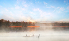 Birds in the mist (augustynbatko) Tags: birds fog mist lake nature landscape clouds trees water sky