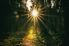 Shine Out (marionrosengarten) Tags: sun light sunbeams forest harz wood trees sunstar sonnenstern blendensterne lenseflare backlight nature sunlight star green autumn nikon sigmaart1835f18