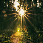 Like Sunbeams thumbnail