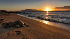 Turtle Sunset (Matthew P Sharp) Tags: hawaii sunset turtle seaturtle usa 80d canon80d canoneos80d canon