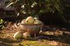 Herbststillleben (Gret B.) Tags: apfel äpfel herbst ton schüssel garten obst stillleben stilllife garden autumn