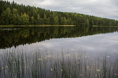 Signs of autumn (Stefano Rugolo) Tags: stefanorugolo pentax k5 smcpentaxda1855mmf3556alwr lake reflection forest water sky sweden sverige hälsingland
