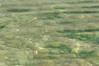DSC_0012 (Michele d'Ancona) Tags: mare cristallino limpido trasparente calmo acqua acquamarina acquasalata pesci pesciolini fondale fondo sassi pietre sole giorno portonovo portonovosbay costaadriatica costaanconetana costamarchigiana