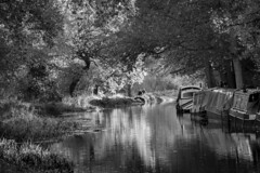 River Wey (tmh900) Tags: reflection wey canal autumn leaves sun light mikon d600
