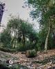 Sutton park panorama up (Beale.UK) Tags: suttonpark suttoncoldfield parks outdoors landscape landscapes bealeuk