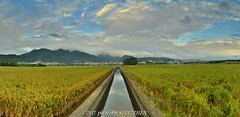 Panoramic view of rice field in Beitou (szintzhen) Tags: 天空 雲 水渠 倒映 關渡平原 稻田 山 北投 台北市 台灣 reflection sky cloud ricefield beitou taipeicity taiwan photomerge