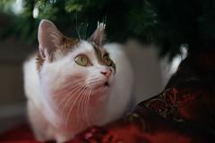 Ella (Garen M.) Tags: dogs silver nikkor85mmf14 sara jojo nikond850 katie maverick mom cats thanksgiving chip susan family buttercup jerry ella