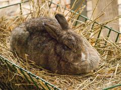 nyuszi (Dreamaxjoe) Tags: animal zoo rabbit tree