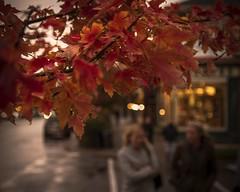 October days (A blond-Tess) Tags: niagaraonthelake canada october autumn autumncolours autumny fall leaves bokeh octoberdays rainyoctoberrainy octoberrainy daysontarioafternooncanon photographysigma 1750mm f28 dof