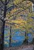 βλΕπω + αγαπώ...! (sifis) Tags: nature wood leaves color sakalak nikon d700 2470 greece lake