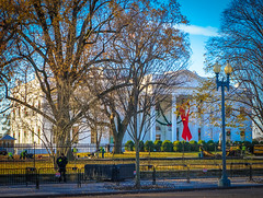 2017.12.01 Red Ribbon at the White House, World AIDS Day, Washington, DC USA 1134