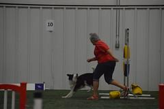 DSC_6666 (jaimekay16) Tags: dog agility k9x k9 xpress leander texas