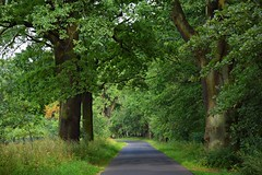 summer moods (JoannaRB2009) Tags: oak oaks path road tree trees green summer mood leaves grass plants nature dolinabaryczy dolwersilesia dolnyśląsk polska poland weather