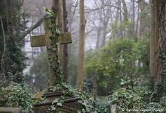 London - Hang In There (Caroline Forest Images) Tags: london northlondon highgatecemetery cemetary graves restingplace england uk highgate