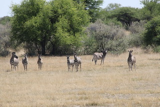 Namibia Hunting Safari 39