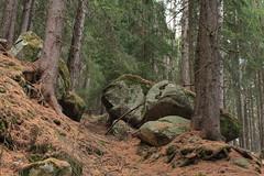 une forêt pleine de blocs (bulbocode909) Tags: valais suisse ravoire forêts arbres nature montagnes automne rochers blocs vert sentiers