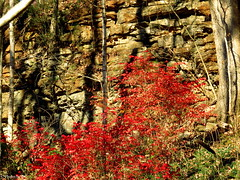 The cliffs by Green River. (~~BC's~~Photographs~~) Tags: bcsphotographs canonsx50 autumn park munfordvillekentucky trees cliffs outdoors naturephotos ourworldinphotosgroup earthwindandfiregroup explorekentucky landscapes