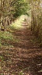 PB030170 (Robert A Stanford) Tags: walking north downs way