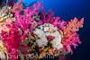 _DSC3568.jpg (pinocnt) Tags: crociera cruise egitto egypt littlebrotherisland marrosso redsea underwater vacanza ngc