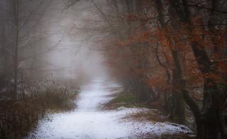 Freezing fog at Highfield Woods
