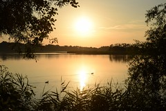 summer moods (JoannaRB2009) Tags: summer mood miliczponds stawymilickie lowersilesia dolnyśląsk polska poland dolinabaryczy sunset water pond reflections ducks birds animals calm peaceful nature landscape view plants trees silhouettes