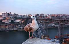 mewa Porto