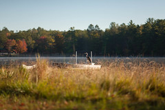 Edit -1-9 (Dane Van) Tags: canon 5d 135mm canadacreekranch lakegeneva atlantamichigan sandhillcrane crane