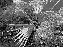 PB160363adfsstt (photos-by-sherm) Tags: cultural arts building fine art drama music uncw university north carolina wilmington nc fall november exterior grounds architecture trees sculptures