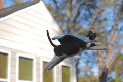 The power of the cape (rootcrop54) Tags: needle felted needlefelting wool cat sculpture miniature superhero flying cape ooak neko macska kedi 猫 kočka kissa γάτα köttur kucing gatto 고양이 kaķis katė katt katze katzen kot кошка mačka gatos maček kitteh chat ネコ 9incheslong art
