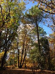 27 (emmess2) Tags: campiglia cinqueterre spezia autumn fall leaves