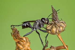 Cold Wasp 2