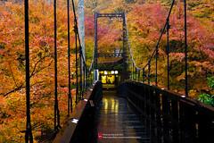 東海自然步道170 (imCherryChen) Tags: 日本 japan 京都 kyoto 高雄 takao たかお 楓 かえで 紅葉 もみじ 東海自然步道 lx5