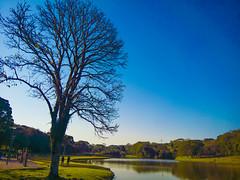Parque São Lourenço (Eduardo PA) Tags: parque são lourenço curitiba paraná nokia pureview microsoft windows phone 950xl lumia wp