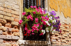 Window in Venice (Maritime Fotografie) Tags: blumen fenster venedig window flower martin tolle mauer landschaft italien mediteran venice venezia sony slta58