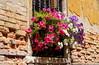 Window in Venice (Martin To.) Tags: blumen fenster venedig window flower martin tolle mauer landschaft italien mediteran venice venezia sony slta58
