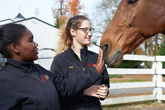 Working Students taking care of our senior EFL horses